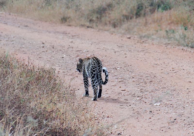safari06