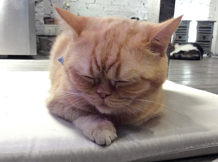 kattecafe i bangkok